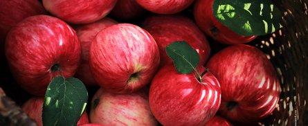 Apfel_Korb_Querkochen