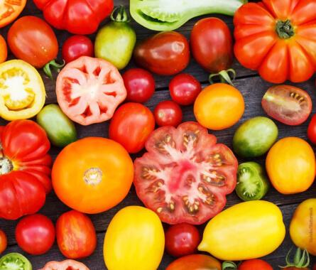 Tomaten - 10 österreichische Sorten - Querkochen