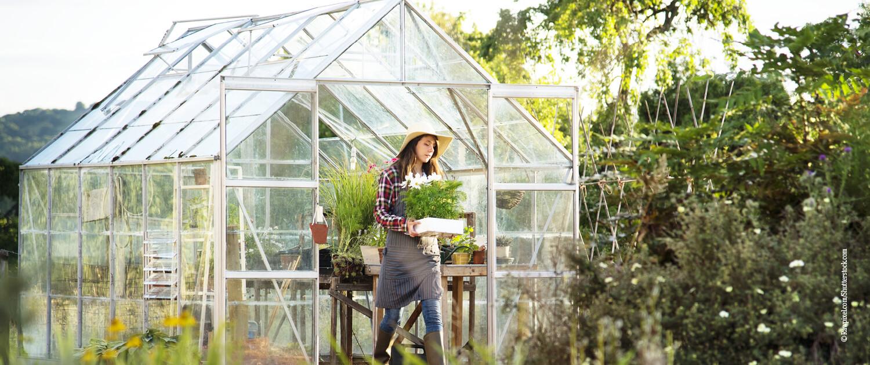 Querkochen Glashaus Gemüse