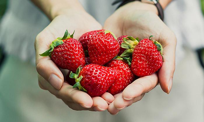Erdbeere Saison