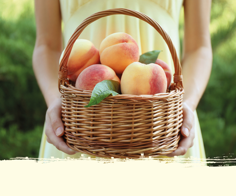 Obst Saison